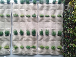OMII_green wall