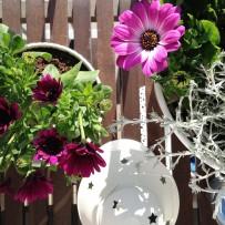 Balkon w kwiatach