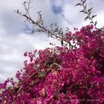 Madera wiosną