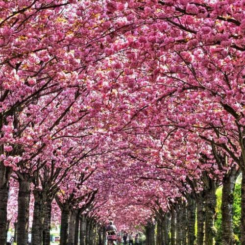 kolory wiosny OMII